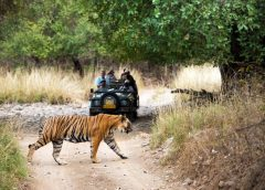 Wildlife Safari Photography: Tips for Getting the Best Pictures