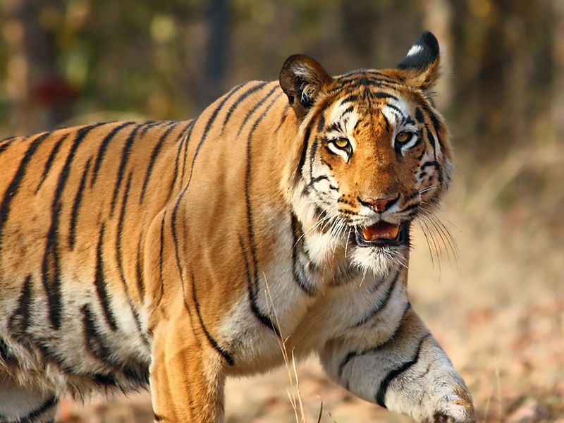 Wildlife Safari Photography
