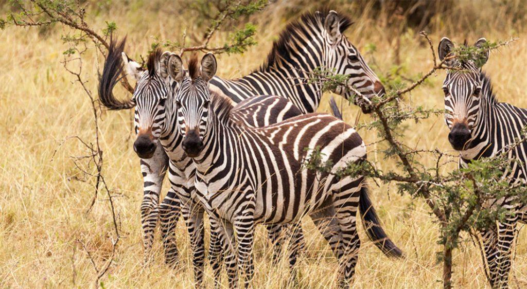 travelling in Uganda