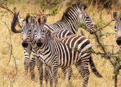 Four off the beaten path activities to indulge in while travelling in Uganda
